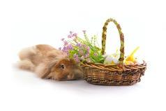 Лежа зайчик и корзина с пасхальными яйцами Стоковое Изображение RF