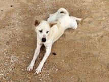 Лежа собака на пляже Стоковое фото RF