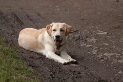 Лежа собака Стоковая Фотография RF