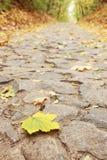 лежит дорога Стоковые Фотографии RF