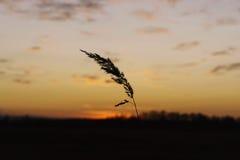 Лезвие в поле Стоковое Изображение RF