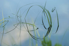 лезвие детализирует воду травы Стоковые Изображения