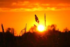 Лезвие на заходе солнца Стоковая Фотография RF