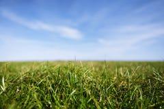 лезвия закрывают траву вверх Стоковое Изображение