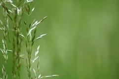 лезвия засевают некоторое травой Стоковые Фотографии RF