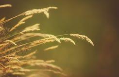Лезвия сухой травы над запачканной предпосылкой Стоковое фото RF
