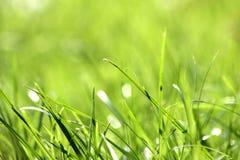 Лезвия травы в поле Стоковое Изображение