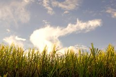 Лезвия травы короля на заходе солнца стоковая фотография