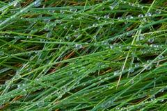 Лезвия 1 травы Стоковые Изображения