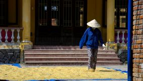 Лейборист в прогулках шляпы и смешивания сушат желтую глину босыми ногами видеоматериал