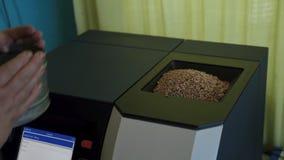 Лейборист льет зерно пшеницы в прибор для для того чтобы проанализировать качество урожаев в аграрной лаборатории акции видеоматериалы