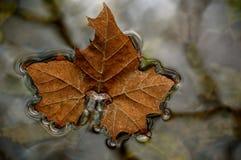 Ленивые лист Стоковая Фотография RF
