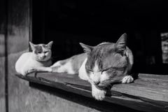 Ленивый кот на времени дня Стоковые Фотографии RF