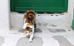 Ленивый кот на острове Mykonos, Греции стоковая фотография