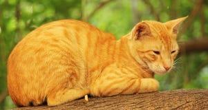 Ленивый кот сидя на ветви дерева стоковые изображения