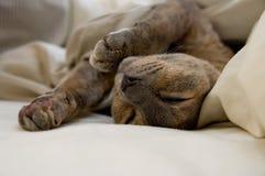 Ленивый кот Стоковое Изображение
