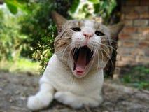 Ленивый названный кот vodai полностью настроение relux стоковое изображение