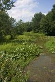 Ленивый поток на день лета Стоковая Фотография RF