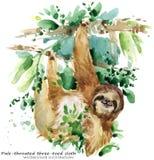 лень тропическая животная иллюстрация акварели бесплатная иллюстрация