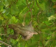 лень Стоковая Фотография RF