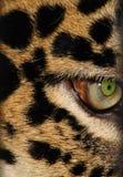 леопард s глаза Стоковая Фотография