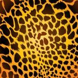 леопард шерсти Стоковое Изображение