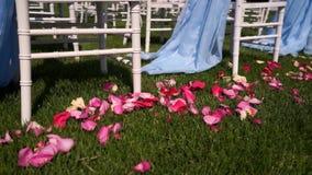 Лепестки белой розы для свадебной церемонии в открытой сельской местности, в природе, лето, теплая погода сток-видео