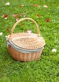 лепестки зеленого цвета травы корзины подняли Стоковое Изображение RF