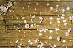 Лепестки и цветки абрикоса которые упали на поверхность старого wo Стоковое Фото
