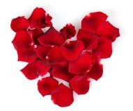 Лепестки красного цвета розовые Стоковые Изображения