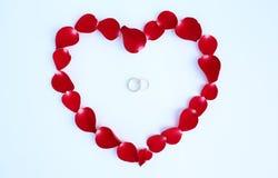 Лепестки красной розы цветут в форме сердца с обручальными кольцами пар на белой предпосылке Стоковое Изображение
