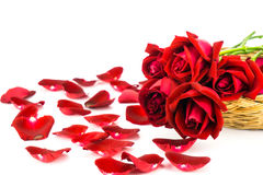 Лепестки красных роз на белой предпосылке Стоковая Фотография RF
