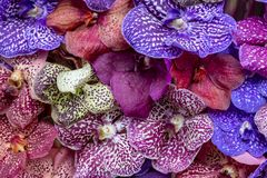 Лепестки орхидей делают по образцу стоковое изображение rf