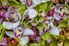 Лепестки орхидей делают по образцу стоковое фото