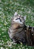 Лепестки падая на кот Стоковая Фотография