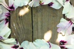Лепестки пиона цветка свадьбы на серой таблице сверху Плоское положение s Стоковые Изображения