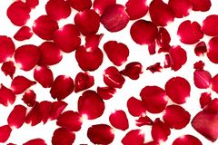 Лепестки розы аранжировали в картине стоковые фотографии rf