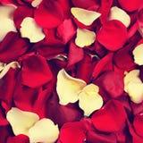 Лепестки розы в ретро стиле Стоковые Изображения RF