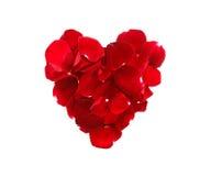 Лепестки розы в сердце формируют изолированный на белой предпосылке Стоковая Фотография RF