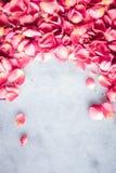Лепестки розы на мраморном камне, флористической предпосылке стоковое фото