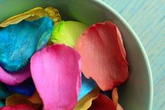 Лепестки розы покрашенные радугой в цветах гей-парада сигнализируют Стоковые Фото