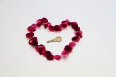 Лепестки розы сформированные как сердце стоковые изображения