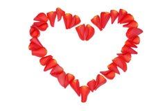 лепестки сердца подняли Стоковая Фотография RF