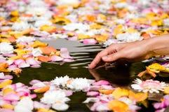 лепестки цветка касатьясь женщине стоковые фото