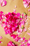 Лепестки Rose Стоковое фото RF