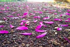 Лепесток на земле Стоковое фото RF