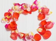 Лепесток розы на деревянной предпосылке Стоковое фото RF