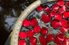 Лепесток розы плавает на воду стоковое изображение rf