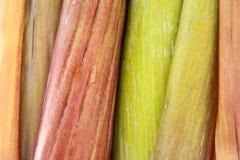 Лепесток цветения банана Стоковое фото RF