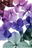лепесток цветка крупного плана цветастый Стоковые Фото